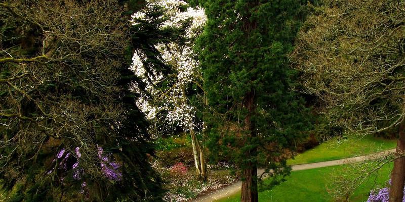Nicotiana Plant Boise Care