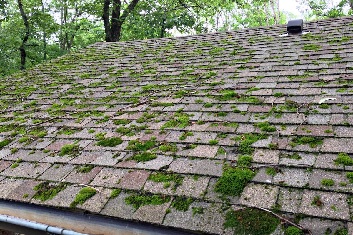 How to Remove Moss from Your Roof