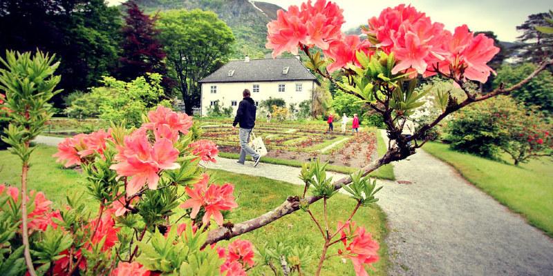 Greatest Cutting-Garden Beauties for Summer