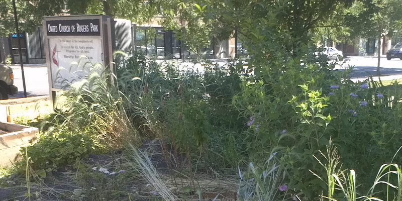 The best way to Plant Salt Lake City Nopales