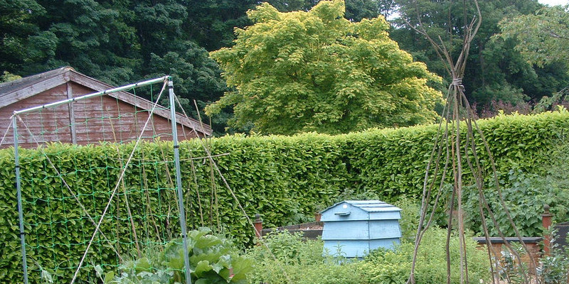 The Uses for Plastic Milk Containers for Gardens